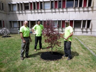 Arbor Day work at MHS